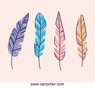 bundle of feather of different colors