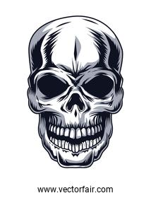 skull head drawn