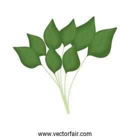 spinach leaves icon