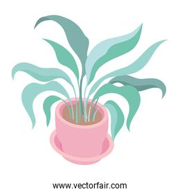 pink potted plant