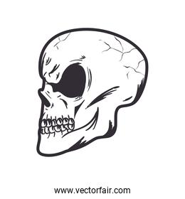 Isolated skull head monochrome icon
