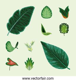collection of nature leaves
