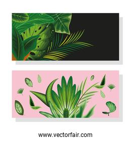 leaves foliage banners