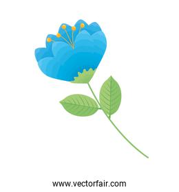 cute blue flower