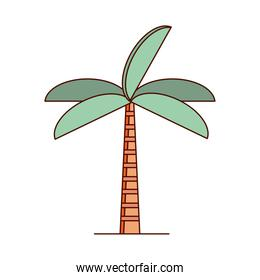 isolated tropical palm tree