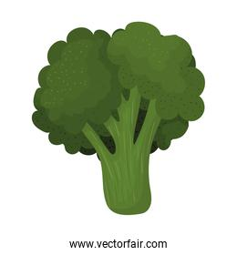 fresh broccoli icon