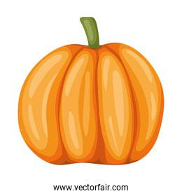 healthy pumpkin icon