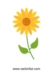 sunflower garden icon