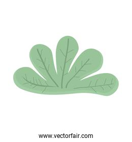 plant leaves nature
