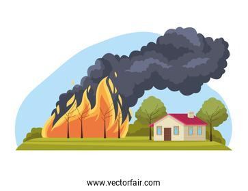 forest fire scene
