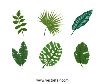tropical exotic leaves