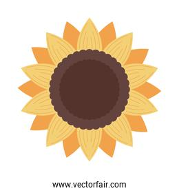 sunflower nature icon