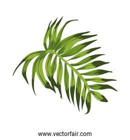 exotic leave plant