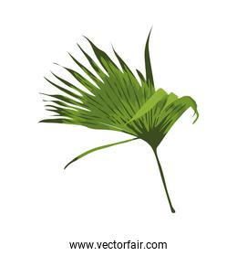 leave palm exotic
