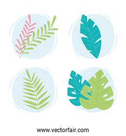 tropical leaves icons