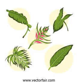 heliconia leafs icons