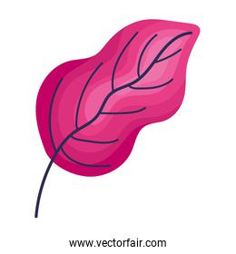 pink leaf isolated