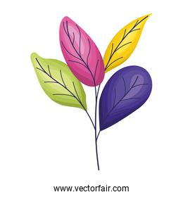 cute colored leaves