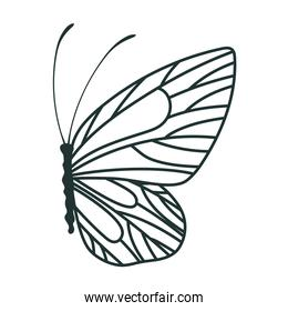 beautiful butterfly icon