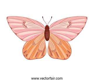 colored butterfly isolated
