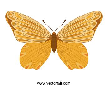 yellow butterfly icon