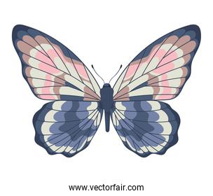 cute butterfly icon