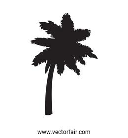 tropical palm icon