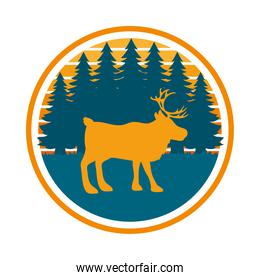 forest and elk