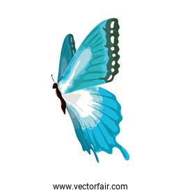butterfly painting wartercolor