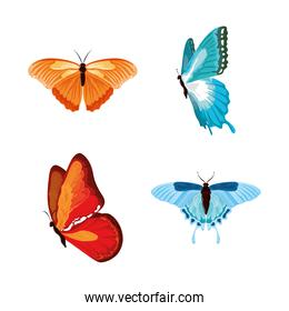 watercolor colored butterflies