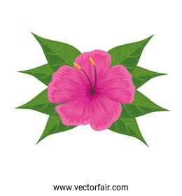 fucsia tropical flower