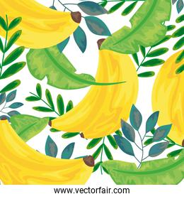 tropical bananas illustration