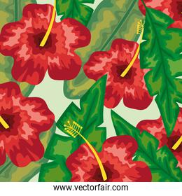 hibiscus flowers illustration