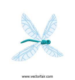 dragonfly insect cartoon