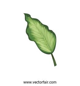 natural leaf icon