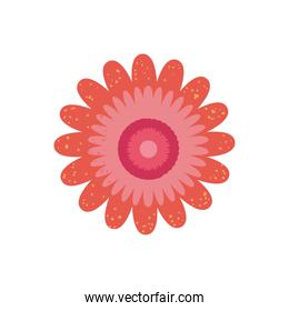 Isolated red flower