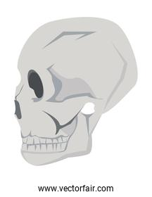 profile head skull