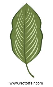 green leave plant