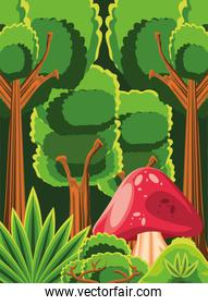 forest fungus trees