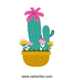 potted cactus flowers