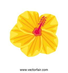 flower hibiscus tropical
