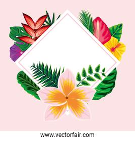 tropical exotic label