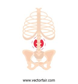 rheumatism spine joint