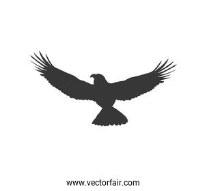 flying eagle animal silhouette