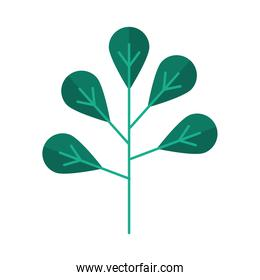 nature tree frond