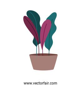 potted plant leaves