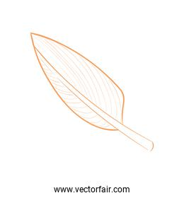 Isolated plant leaf