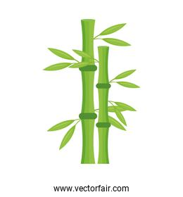 bamboo plant nature
