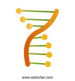 green and yellow dna