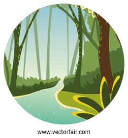 forest trees water